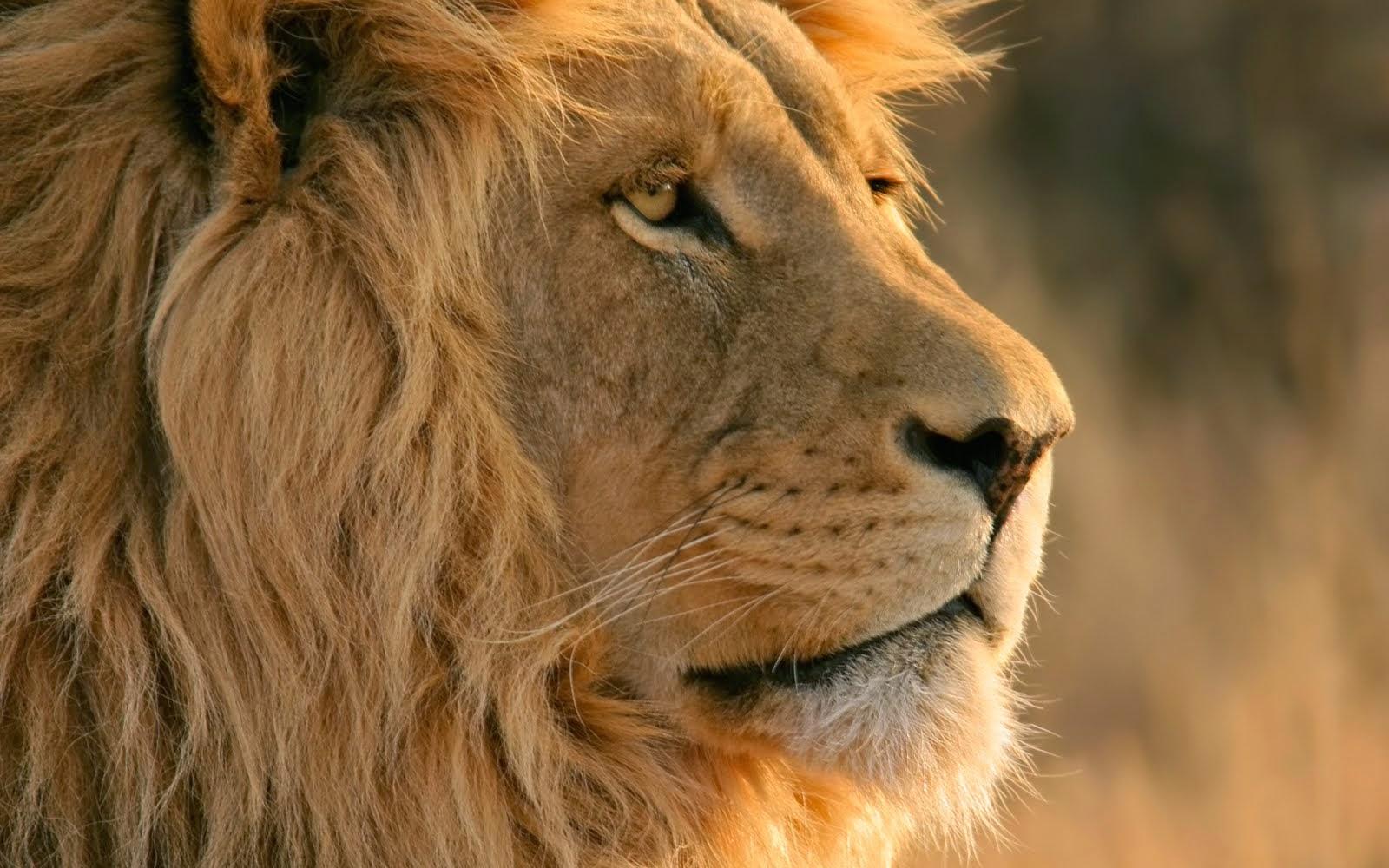 os x lion wallpaper - photo #20