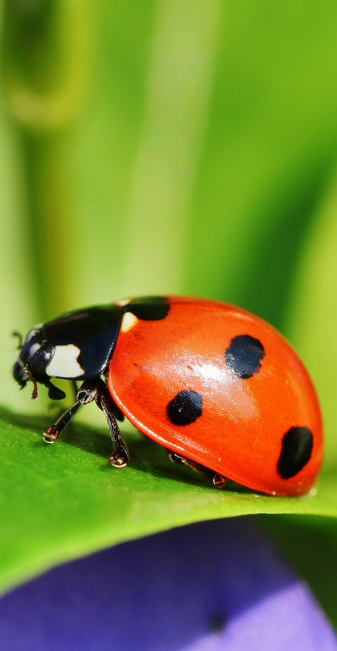 A ladybug up close.