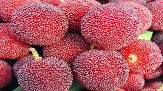 yangmei fruit images wallpaper