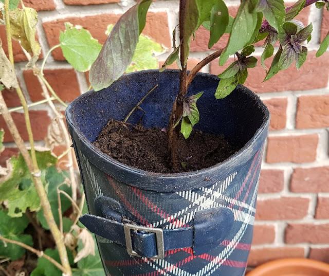 DIY: Schnell mal einen Stiefel bepflanzen. Ich habe für das Einpflanzen eine einfache Anleitung!