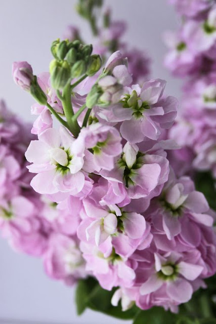 Pink%2Bstock%2Bflowers.jpg