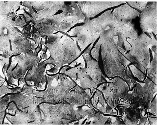 cast iron grey microstructure