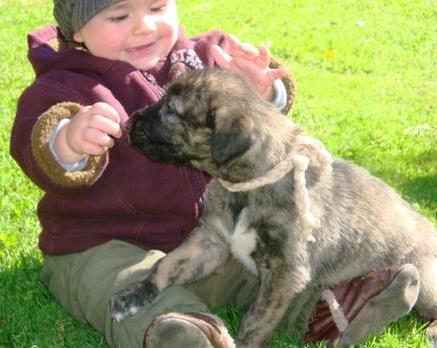 Irish Wolfhound Training Secrets