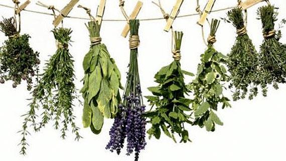 Δυνατότητες ανάπτυξης των ορεινών περιοχών με αρωματικά/φαρμακευτικά φυτά
