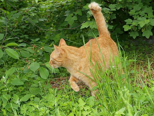 Kot w ogródku