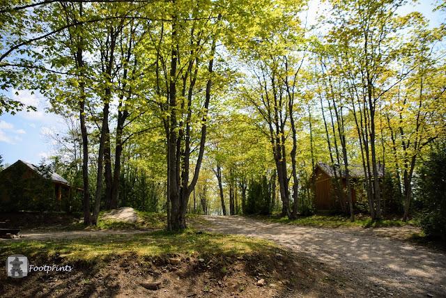 Unsere Cabin steht unter hohen schattenspendenden Baeumen.  Zedern bieten zu beiden ausserdem zusaetzlichen Sichtschutz zu eventuellen, aber noch nicht vorhanden Nachbarn.