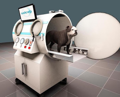 India. Veterinary Hyperbaric Oxygen Therapy Chamber (VHBOT) for small animals.