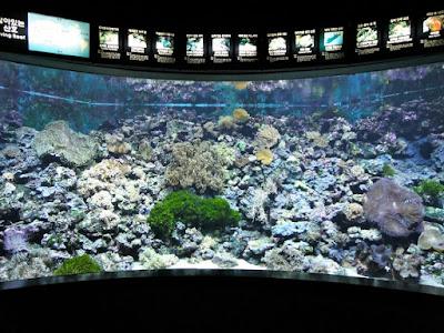 Fish tank in Coex Aquarium Seoul South Korea
