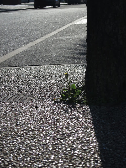 Plant by tree in central reservation in city road with sunlight reflecting on hard surface.