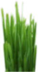5_Grass_blured.png