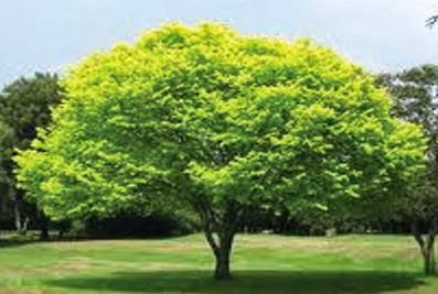 Variksh bachao pryavaran bachao, पेड़ बचाओ पर्यावरण बचाओ, Save Trees Save the Environment, पेड़ बचाओ पर्यावरण बचाओ, Save Trees Save the Environment , variksho ke berok tok kate jaane se durlabh jiv jantu samapat ho rahe hai..