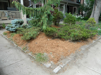 Toronto Leslieville front garden summer cleanup after Paul Jung Gardening Services