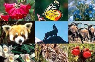 Pengertian Flora & Fauna Serta Contohnya