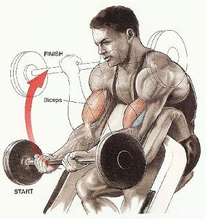 Bicep Workouts3