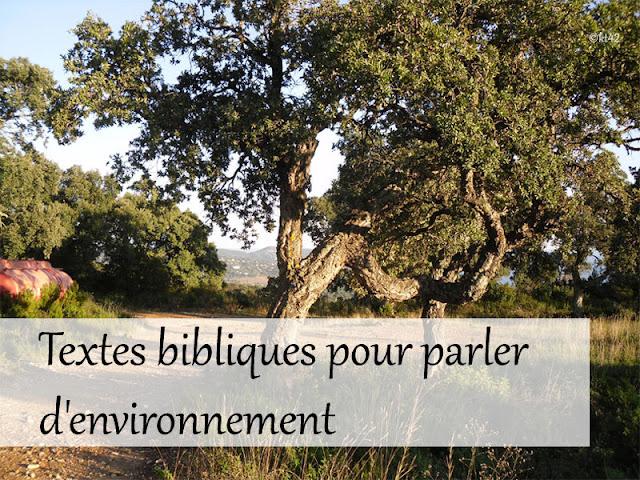 Textes bibliques pour parler d'environnement au caté