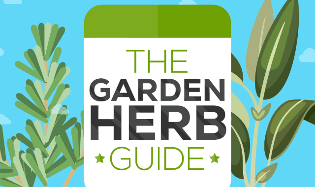 The Garden Herb Guide