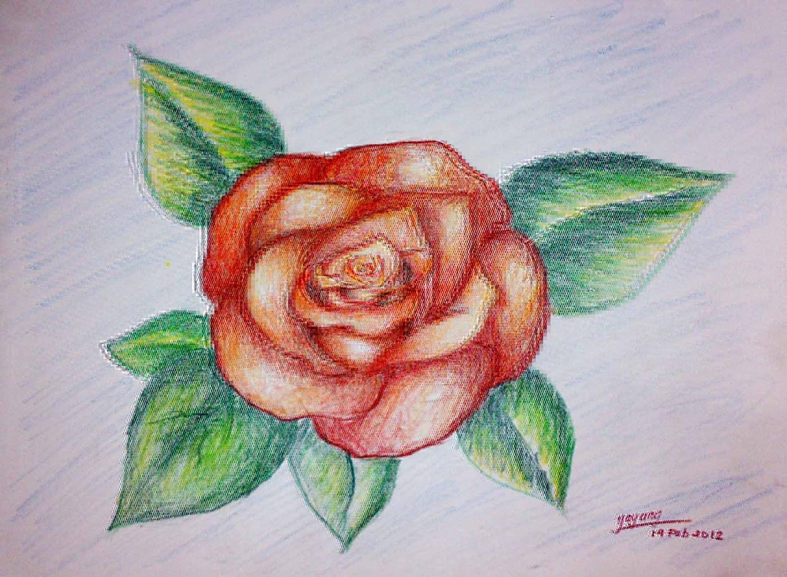 Sketsa Gambar Bunga Berwarna