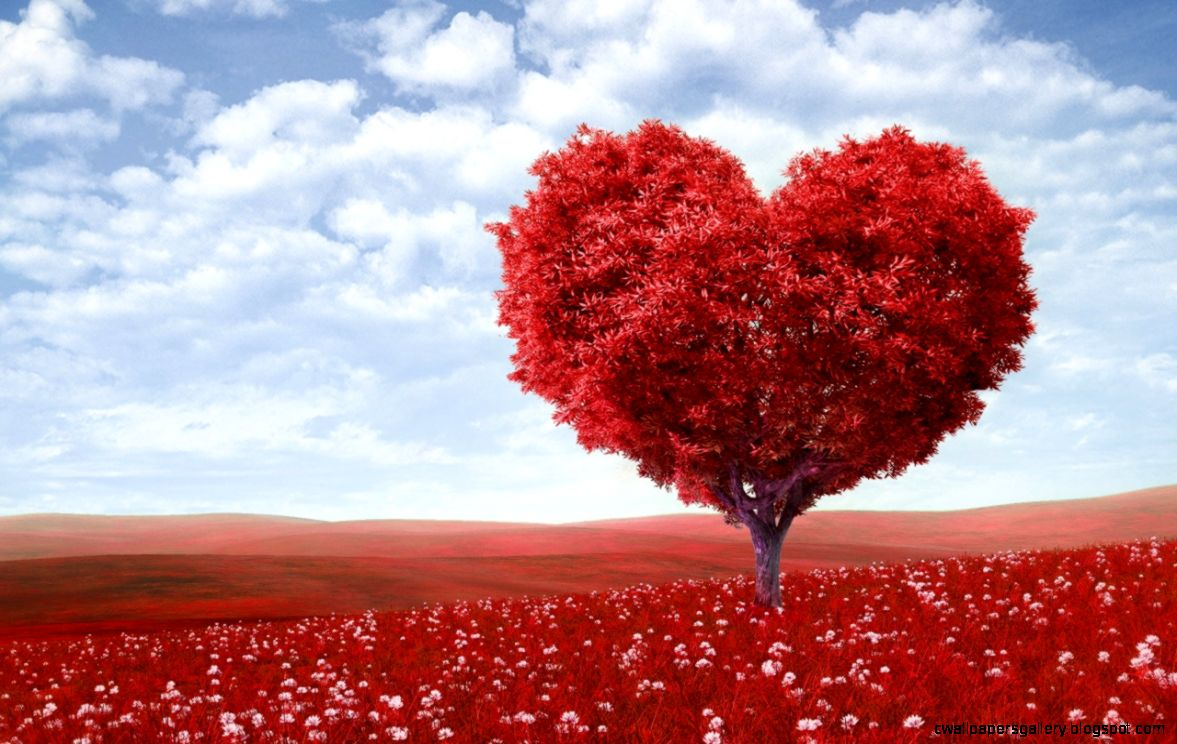 most beautiful wallpapers of hearts wallpapers gallery