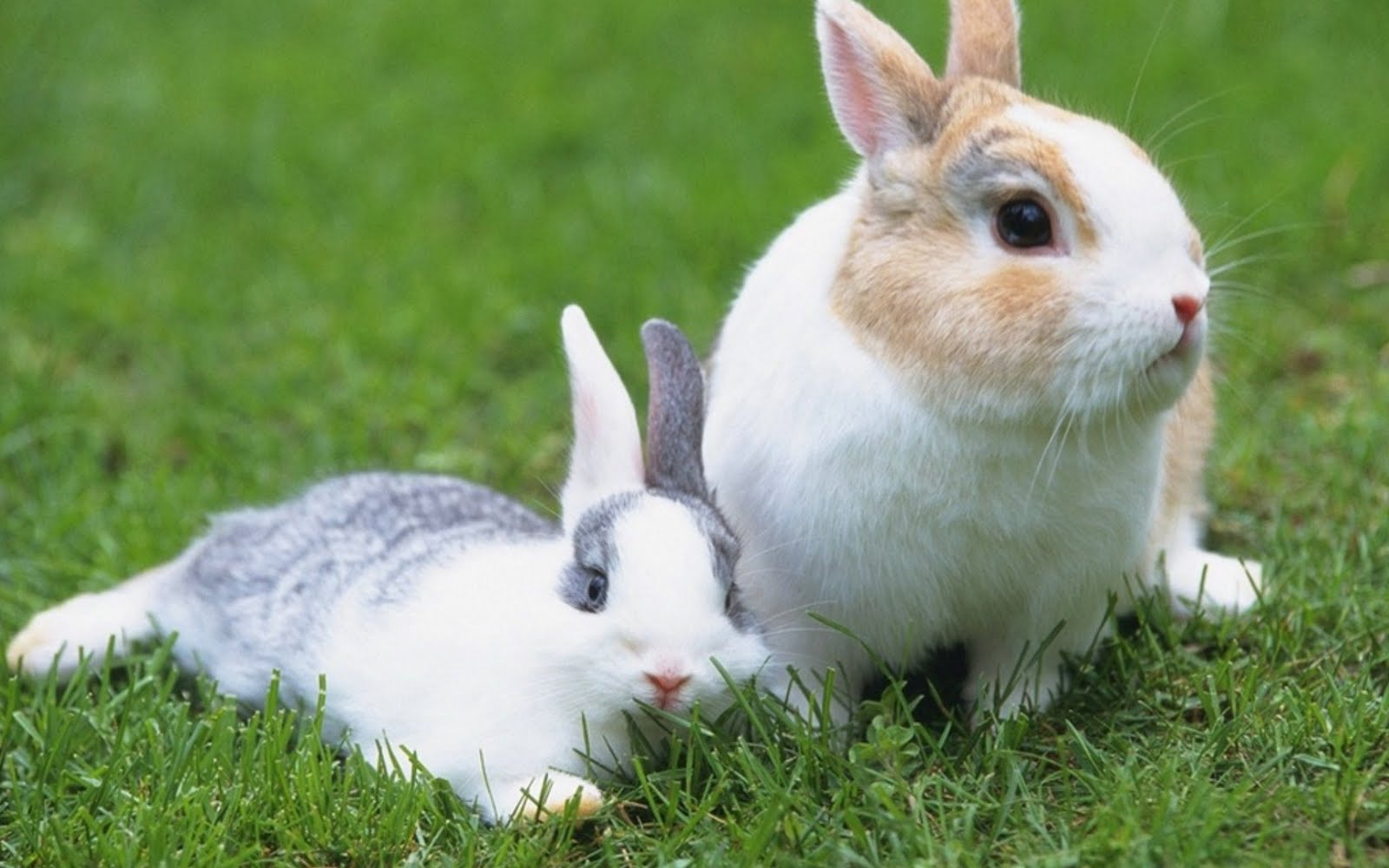 Top 33 Beautiful And Cute Rabbit Wallpapers In Hd