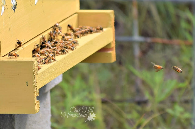 How to feed your new bees, an overview of feeders and feeding methods - from Oak Hill Homestead