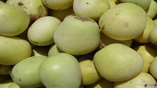 marula fruit images wallpaper