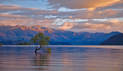 Wanaka Tree por Stephane Pakula