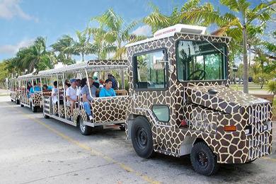 Como se locomover dentro do Miami Zoo