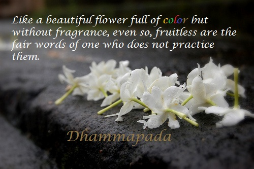 Buddha Quotes Online Like A Beautiful Flower Full Of Color But