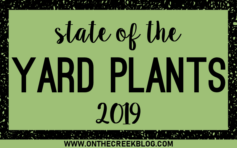 State of the yard plants! Take a tour of my yard & see how my plants are doing after the long winter!