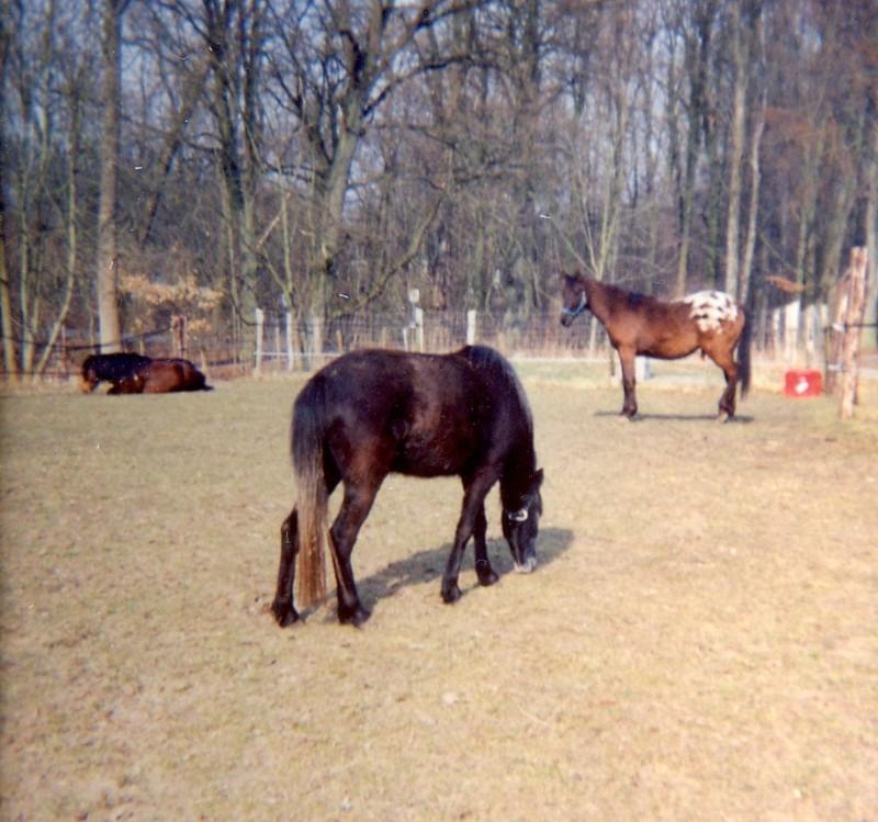 Pferde Unsere Stolzen Freunde Wie Wann Und Wie Lange Schlafen Pferde