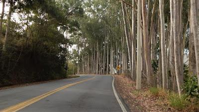 Na subida para Serra Negra, as curvas são cercadas por eucaliptos.