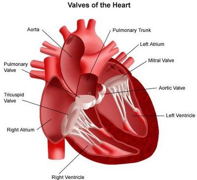 Cara Terbaik Mengatasi Jantung Rematik dan Cara Mencegah Rematik Jantung