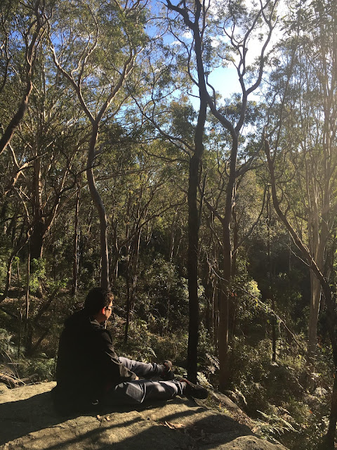 Bushwalking in Sydney