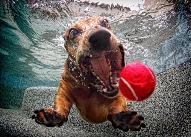 smijesne slike pasa