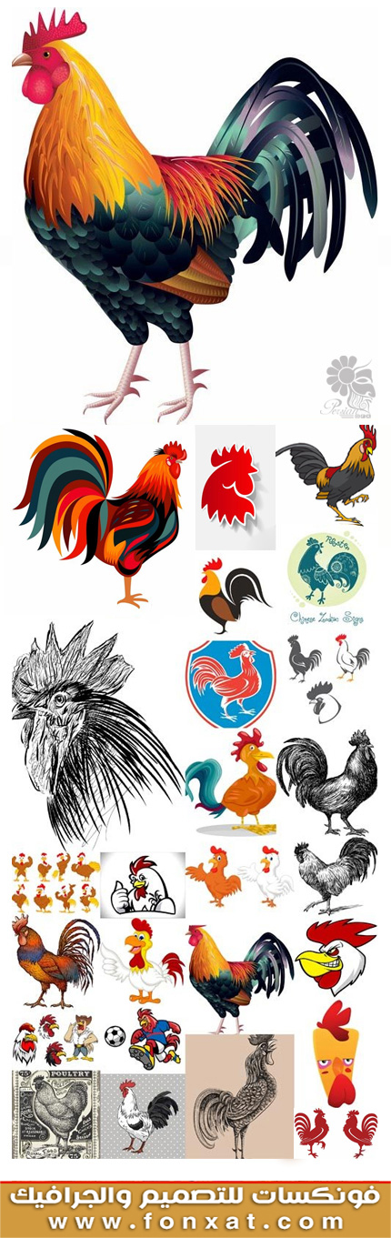 Download vector illustrations cock