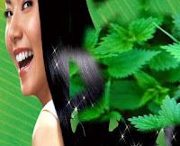 Die Wirkungen von Brennessel Shampoo
