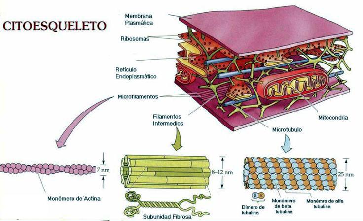 Para que serve a bioquimica