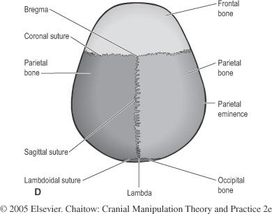 A Palpation Exercise: Identifying Cranial Landmarks | Leon ...