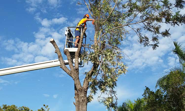 Tree-removal-company-in-Perth