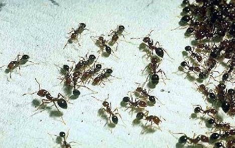 Soñar con Hormigas ¿Que Significa?