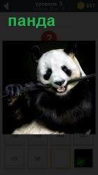 ответ на 3 уровень панда