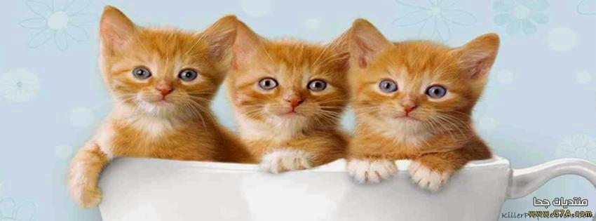 كفرات قطط للفيس بوك و اغلفة فيس بوك قطط و غلافات قطط للفيس و صور كفرات قطط