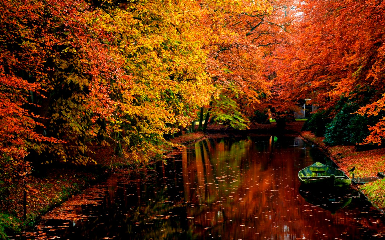 Trees Tree Autumn Nature Live Wallpaper Free Download For Windows