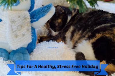 Cat sleeping under holiday tree