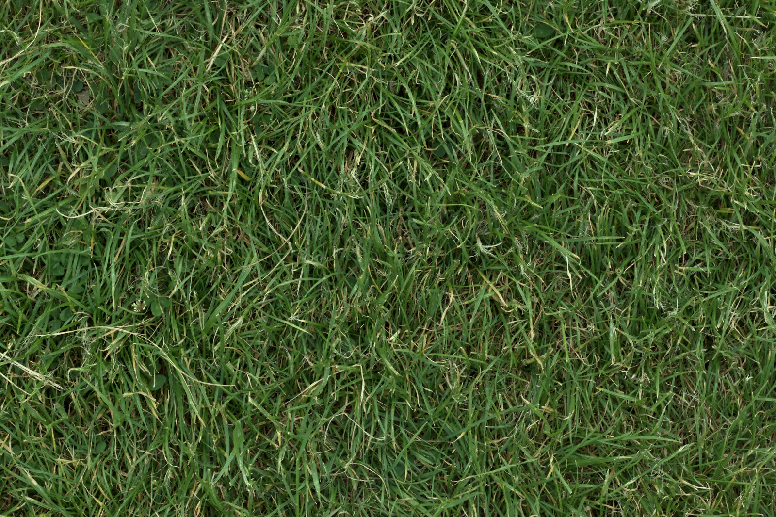 (GRASS 3) turf lawn green ground field texture