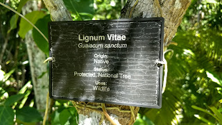 how to identify Tree identification trail signs lignum vitae