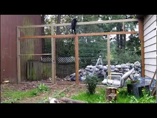 Cats will climb