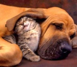 Les piqûres de puces sur les chiens et les chats