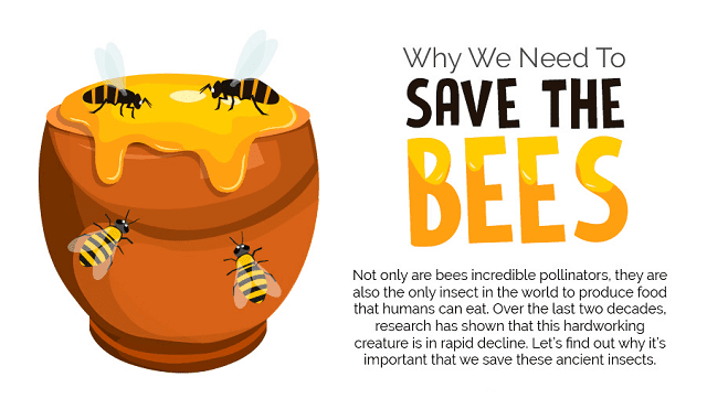 Why We Need To Save The Bees