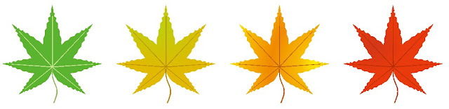 モミジの葉のイラスト。